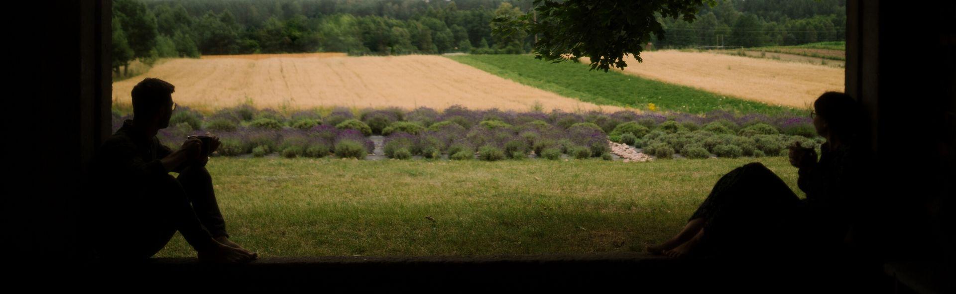 Dworzysk lawendowe pole